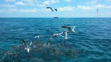 大堡礁-大堡礁-Feifei