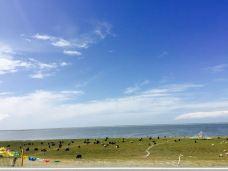 青海湖洱海-共和-尹泡喵