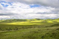 红原—若尔盖大草原-阿坝-doris圈圈