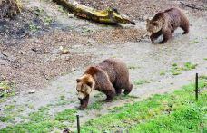 伯尔尼熊公园-伯尔尼-是条胳膊