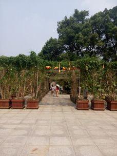 南山植物园-重庆-_CFT01****3931106