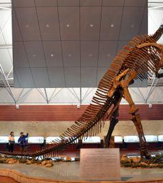 诸城游记图文-诸城的白垩纪往事:一亿年前的三个场景