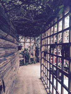 南山植物园-重庆-yy199500