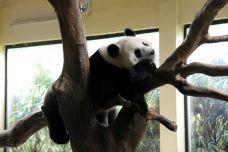 长隆野生动物世界-广州-仲维东