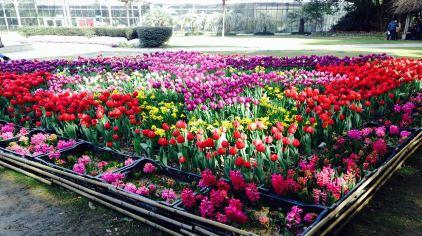 武汉植物园 (15)