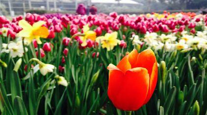 武汉植物园 (2)