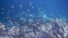 薇拉瓦鲁岛浮潜体验
