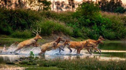 湿地麋鹿_meitu_10