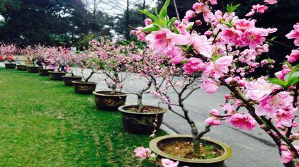 武汉植物园 (4)