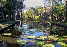 庞普勒斯植物园-毛里求斯-游友攻略2014
