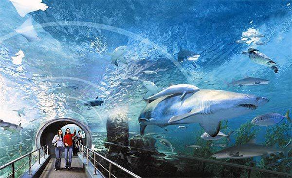 曼谷暹羅海洋世界  Sea Life Bangkok Ocean World   -2