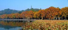 西湖秋色-醉美西湖-杭州-300****902