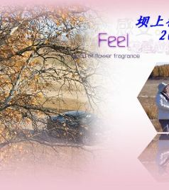 塞罕坝游记图文-永远的秋色---坝上行