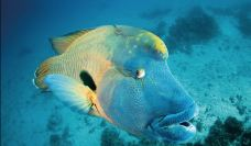 大堡礁-大堡礁-Segancao