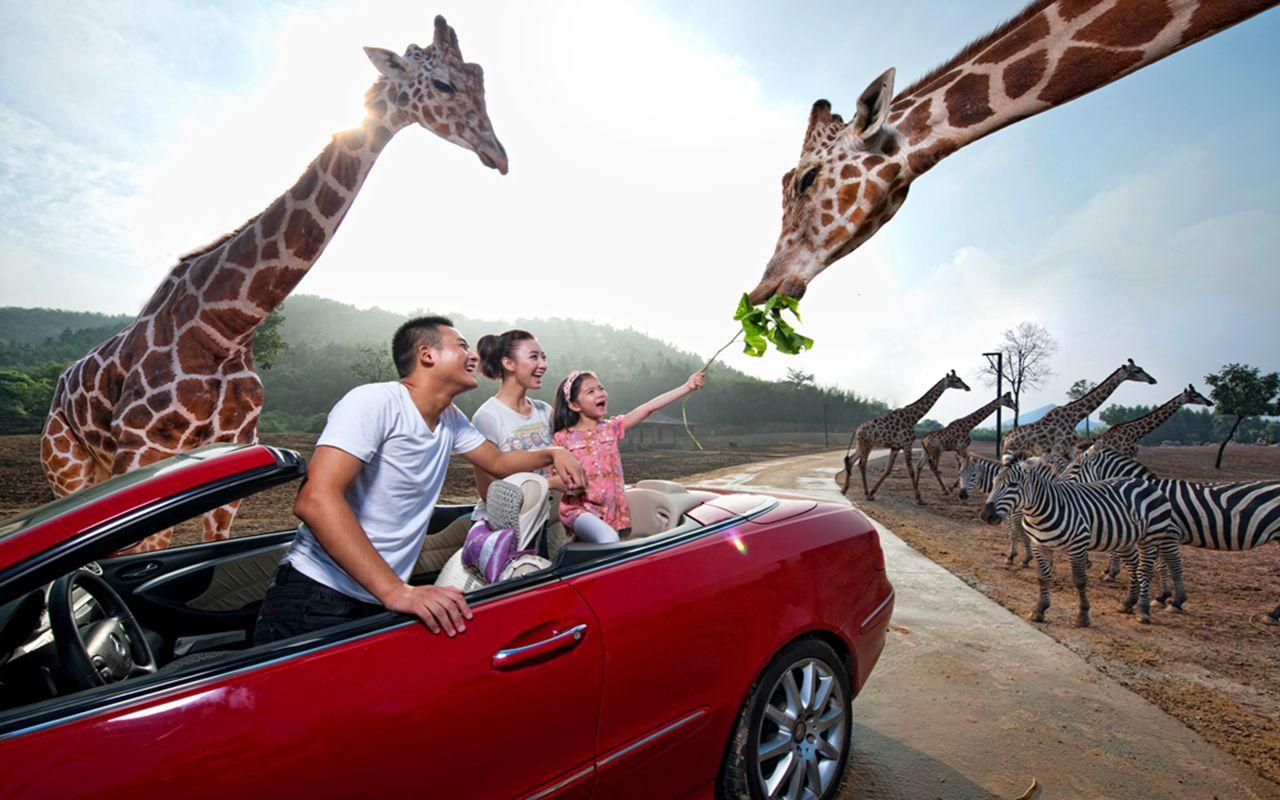 Hangzhou Safari Park Admission Ticket