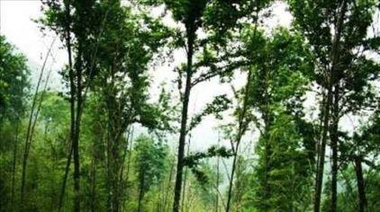 湖南岳阳五尖山森林公园11