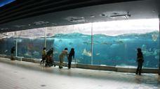 神户市立须磨海滨水族园