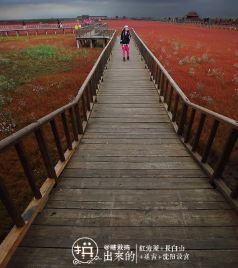 辽宁游记图文-在多人之【秋】扫平红海滩、长白山、延吉、沈阳故宫:站站在拼,一站都不能少